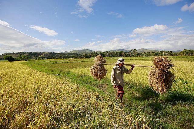 mlodzi-rolnicy